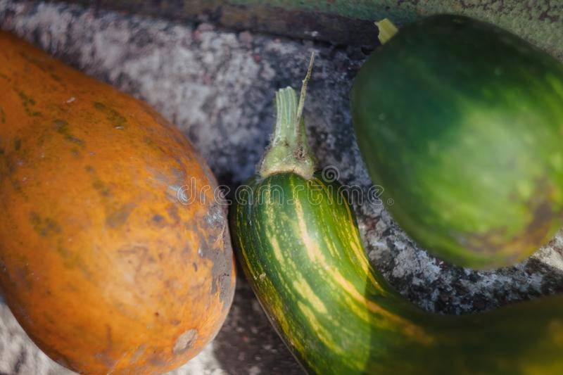 Green and orange pumpkins of different shapes, bottle lie in a heap in the garden. In a dark tone. Thanksgiving concept.  stock images