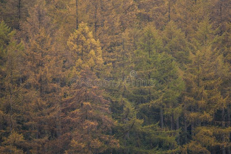 Tree tops in a forest. Green and orange tree tops in a forest stock image