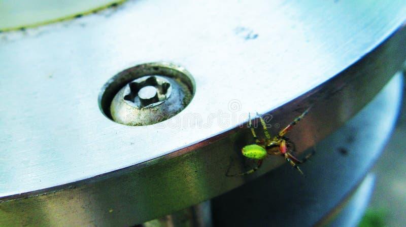 Green Orb-Weaver Spider. In Amsterdam park stock image