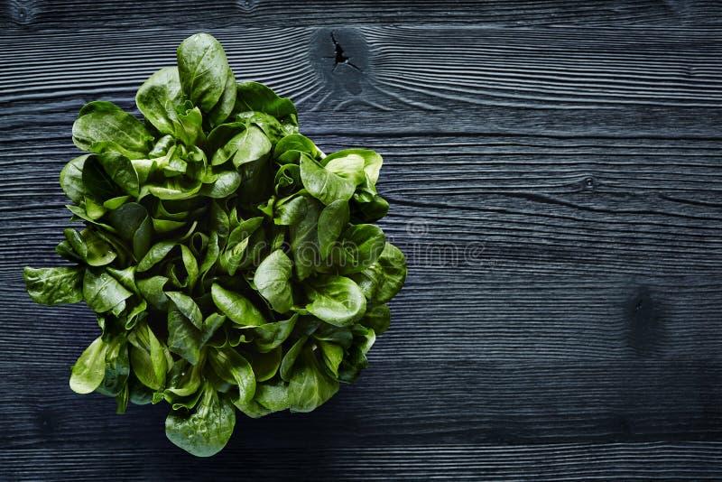 Green organic salad on dark wood foodie lifestyle. High contrast green in dark kitchen atmosphere stock photos