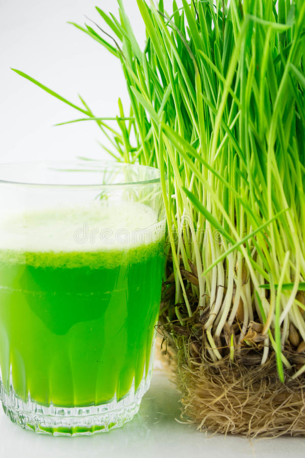 Green organic wheat grass juice ready to drink royalty free stock photos