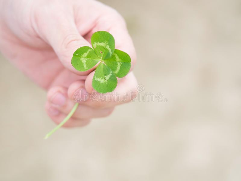 Green our leaf clover in a man`s hand royalty free stock image
