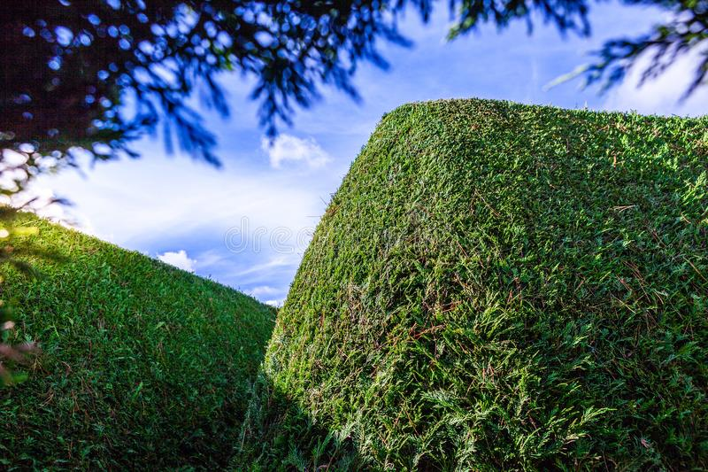Green outdoor maze wall under blue sky. royalty free stock image
