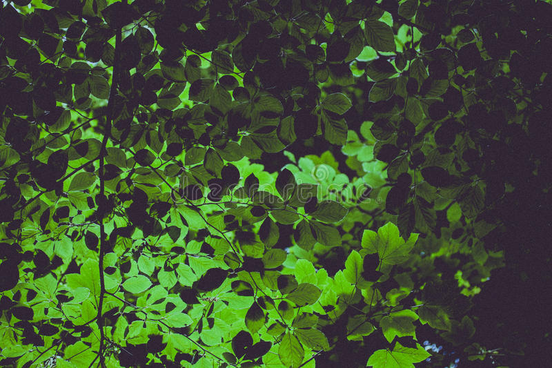Download Green Ovate Leafed Plant stock photo. Image of nature - 82995156