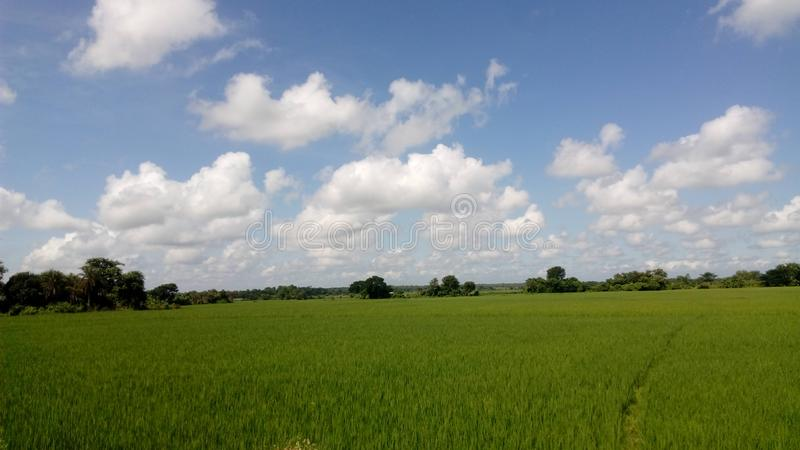 Green paddy fields and blue skies. India  village image stock photos