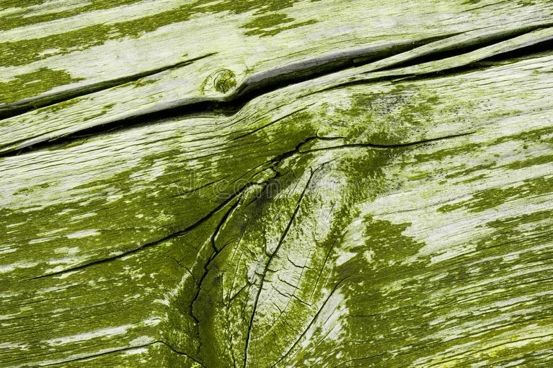 Green painted wood texture stock image