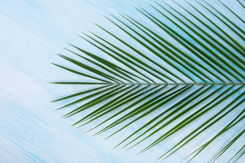 Green palm branch on a blue background, close-up royalty free stock images