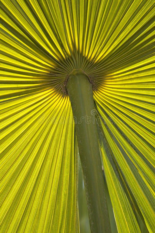 Download Green Palm fond stock photo. Image of tropical, tropic - 14650626