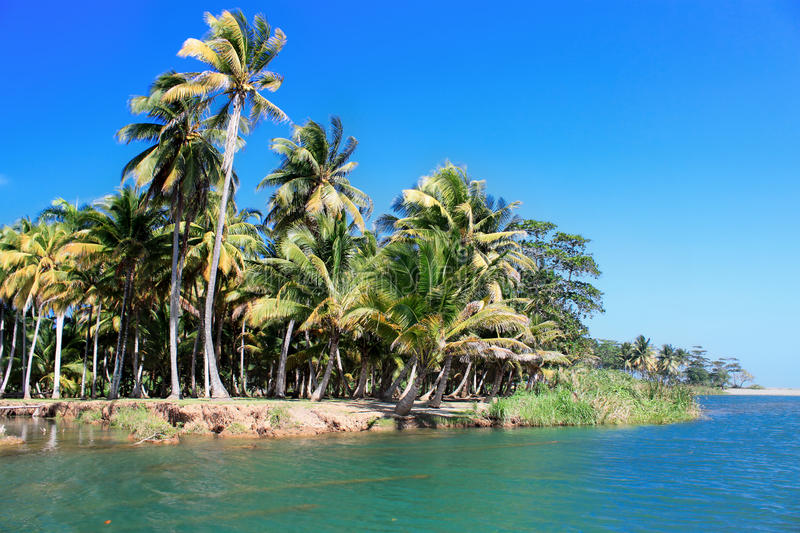 Download Green Palm Forest, Beautiful  Landscape In Baracoa Stock Image - Image: 25142261