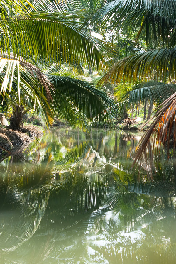 Download Green Palm Forest By A Small Canal Stock Photo - Image: 9103316
