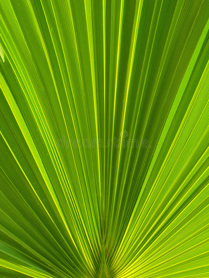 Free Green Palm Leaf Royalty Free Stock Images - 10732949