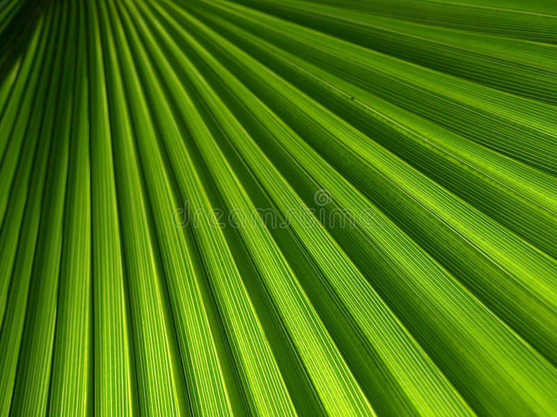 Green palm leaf stock image