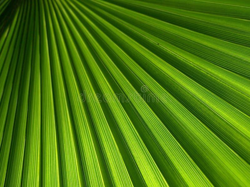 Download Green Palm Leaf Stock Image - Image: 12750921