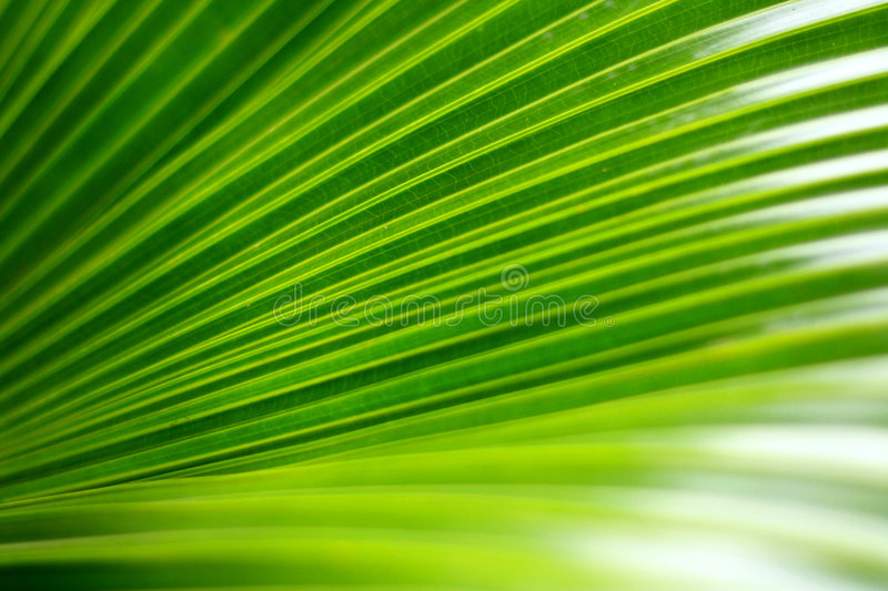 Green palm leaf stock photos