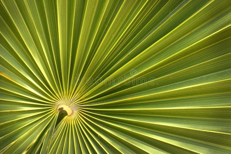Green palm leaf background stock image