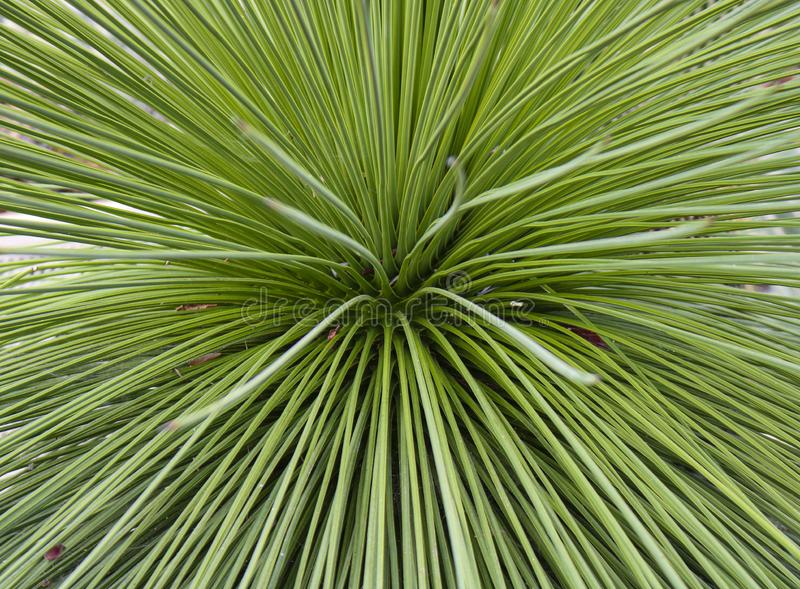 Green palm leaf for background. royalty free stock photo