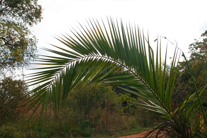ARCHED PALM LEAF royalty free stock image