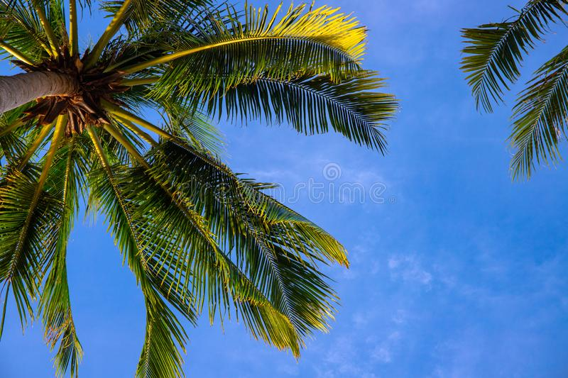 Green palm leaf on blue sky background. Optimistic tropical nature photo. Fluffy palm leaf on wind stock photos