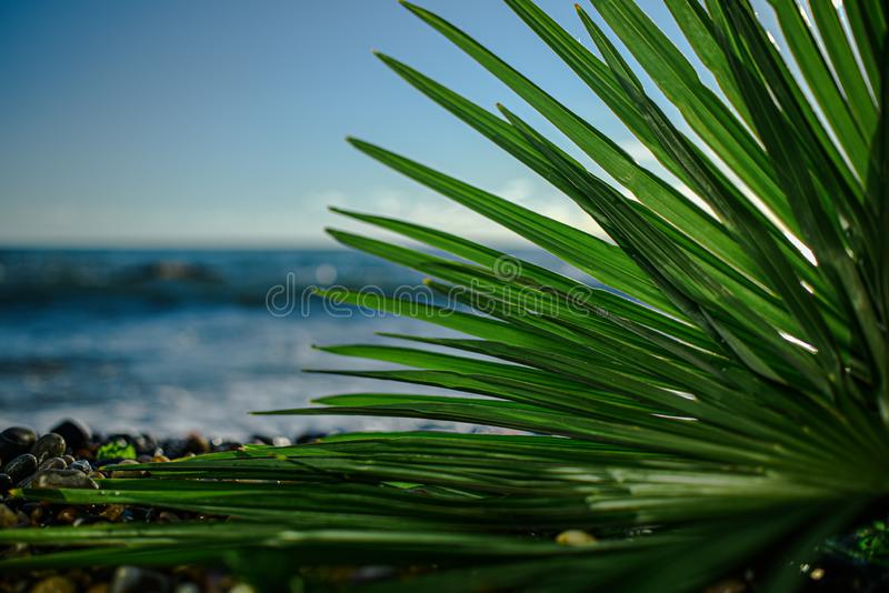 Green palm leaf close up on background of the sea in the afternoon. Tree, beach, blue, coconut, holiday, island, landscape, nature, outdoor, paradise, plant royalty free stock photo