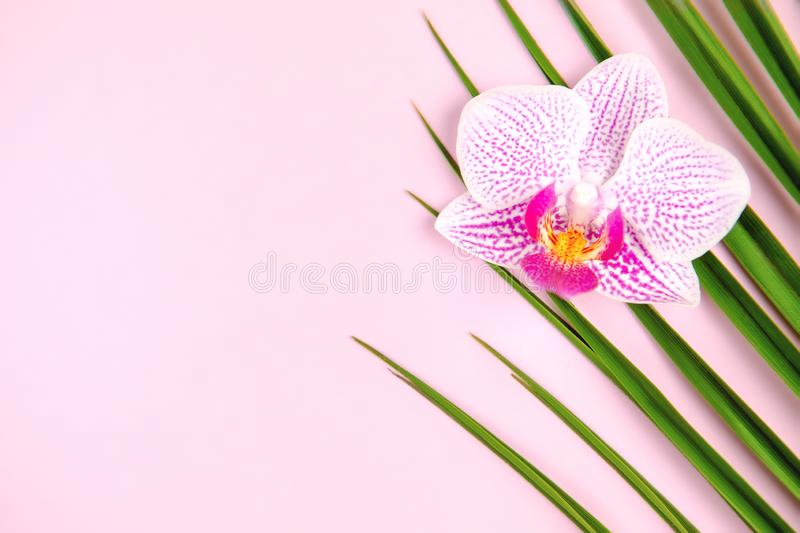 Green palm leaf and orchid flower on pink background stock images