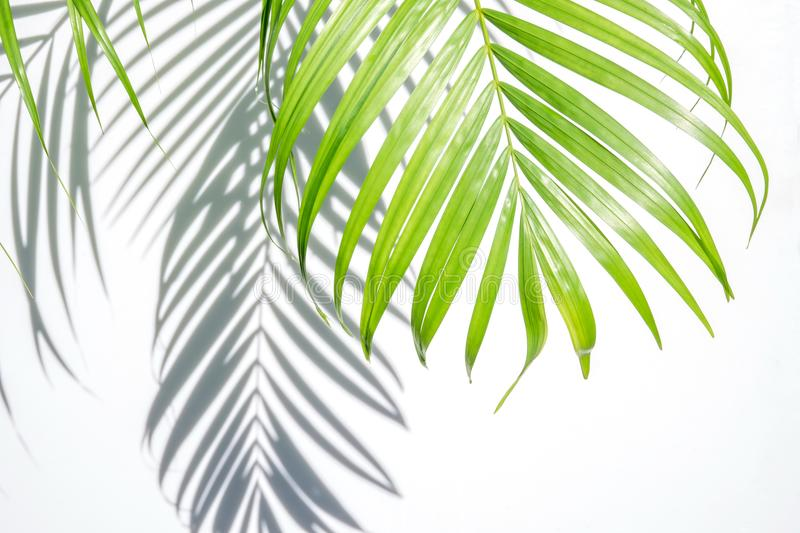 Green palm leaf and shadow on a white background stock images