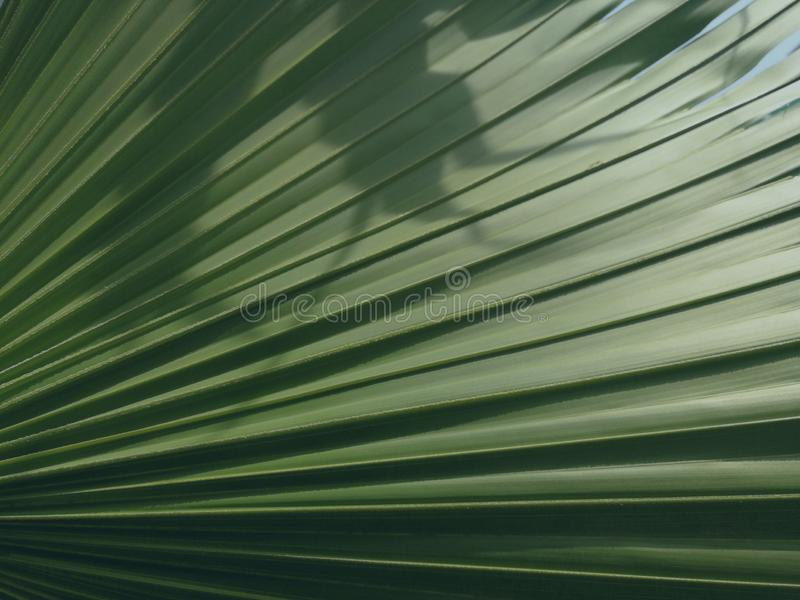 Green palm leaf texture as background. Green palm leaf texture background fan tile wonderful shades shadow lines geometry light bright royalty free stock images