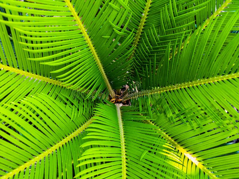 Green Palm Leaves Free Public Domain Cc0 Image