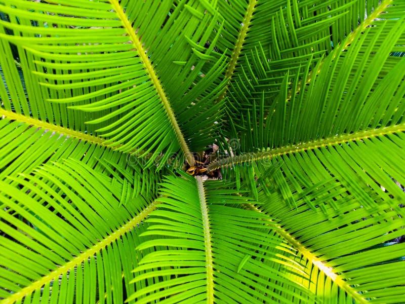Green Palm Leaves Free Public Domain Cc0 Image