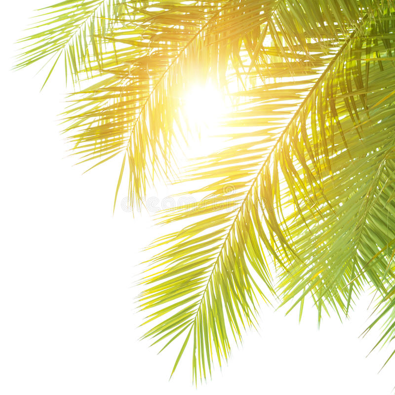 Green palm leaves border royalty free stock photo