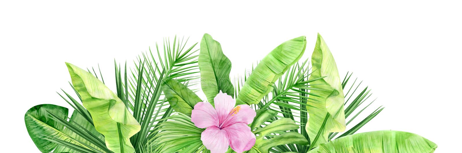 Green palm leaves and flowers banner. Tropical plant. Hand painted watercolor illustration isolated on white background. Realistic. Botanical art. For Web royalty free stock image