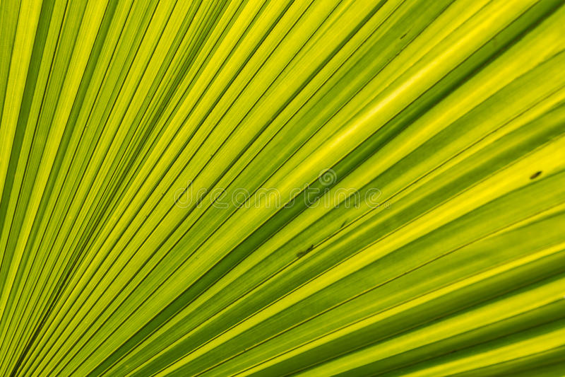 Green Palm leaves lines and textures royalty free stock photo
