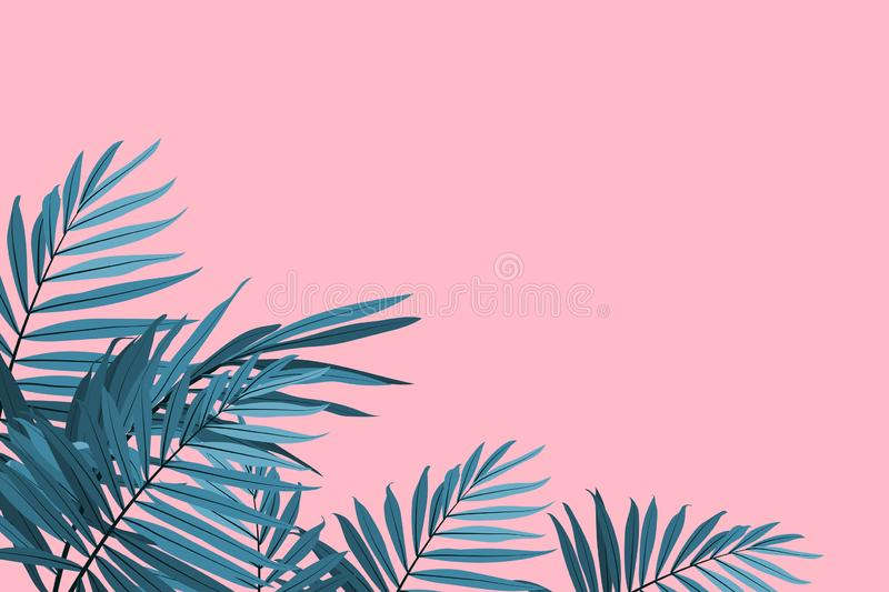 Green palm leaves on a pink background. Tropical leaves trendy background. Vector illustration royalty free illustration