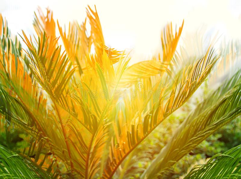 Green palm leaves. Natural tropical plant background. stock photos