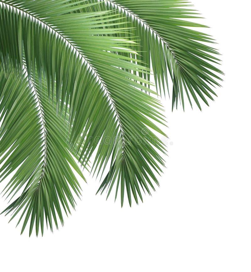 Пальмы вектор