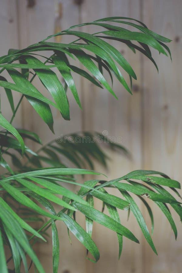 Green Palm Plant Free Public Domain Cc0 Image