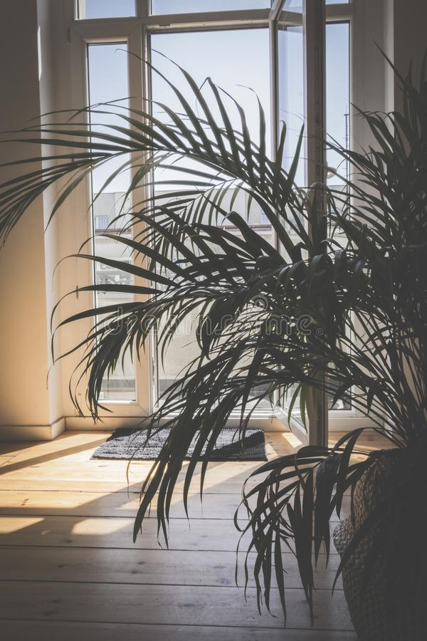Green Palm Plant Inside Room royalty free stock images