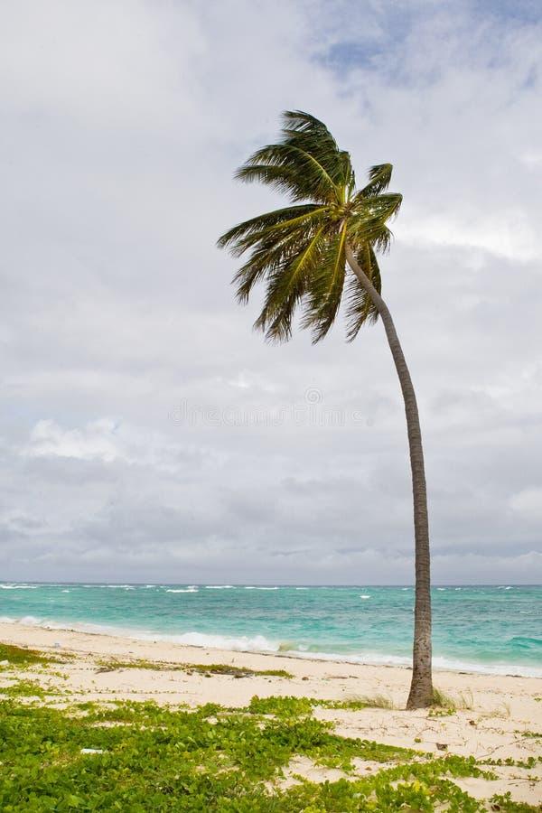 Green Palm On A Sand Beach Under Cloud Sky Stock Photography