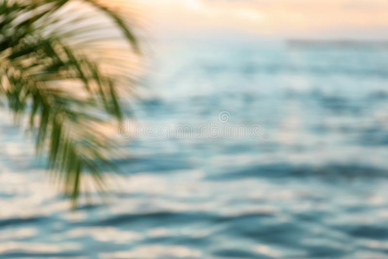 Green palm at sea resort, blurred view stock image