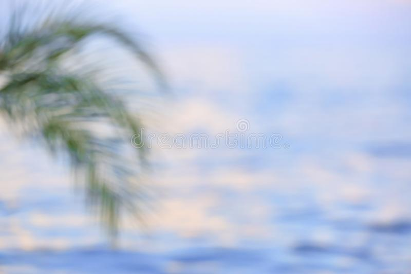 Green palm at sea resort, blurred view stock photos