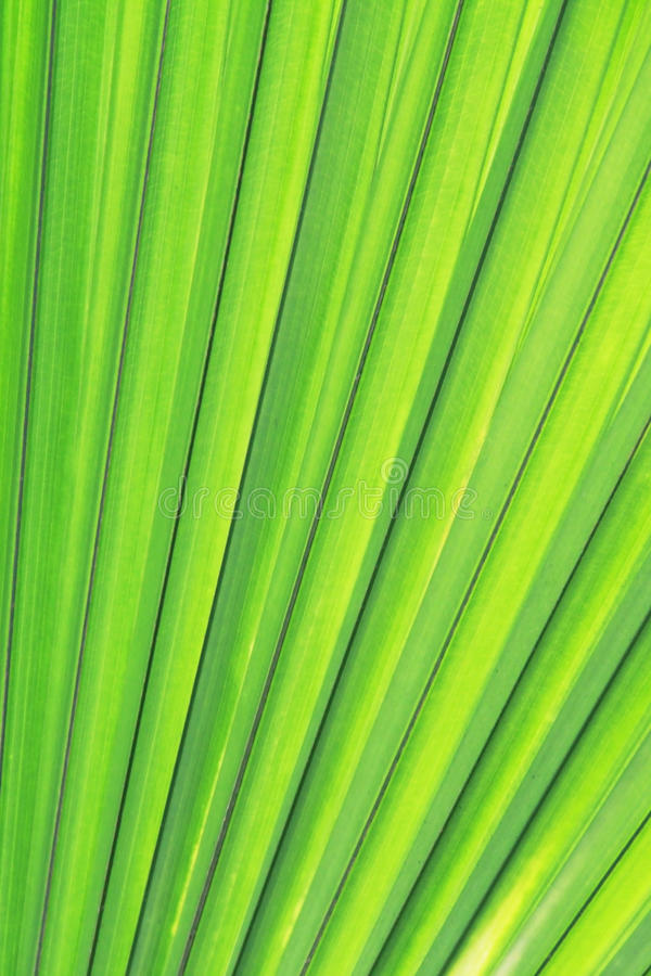 Free Green Palm Texture Royalty Free Stock Image - 21992906