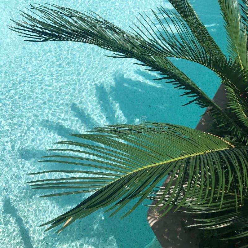 Green Palm Tree stock photos