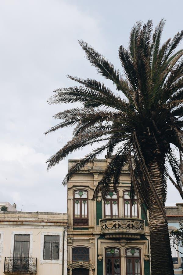 Green Palm Tree Across Concrete House stock photography