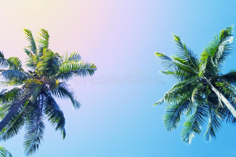 Green palm tree crowns on blue sky background. Coco palm vintage toned photo. royalty free stock images
