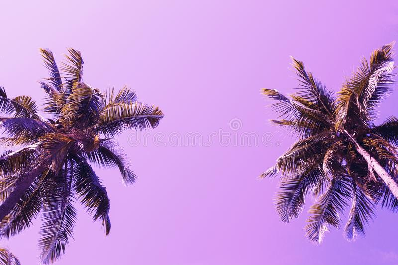 Green palm tree crowns on violet sky background. Coco palm pink toned photo. stock photo