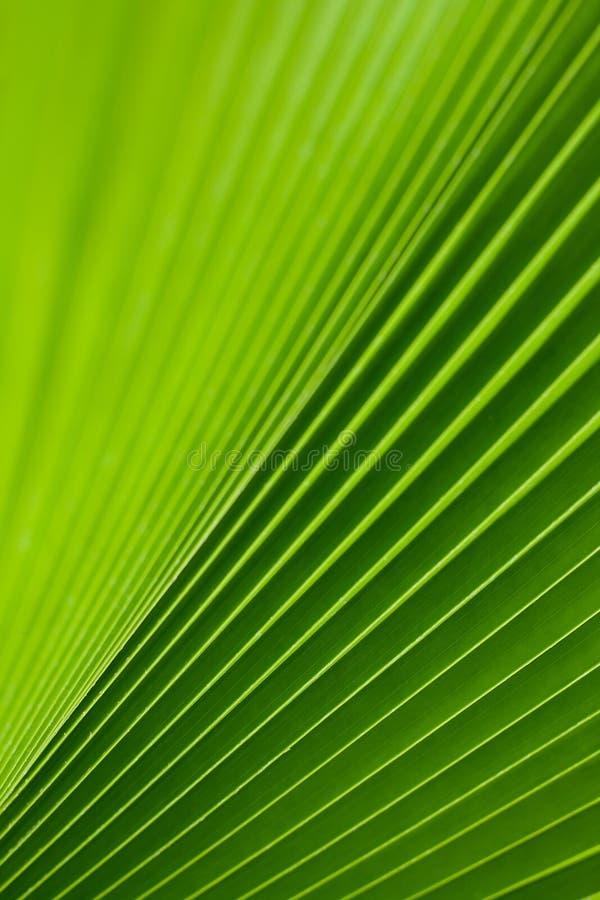 Green Palm Tree Leaf Royalty Free Stock Photo