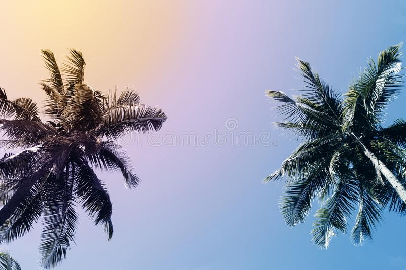 Green palm tree silhouette on sunset sky background. Coco palm vintage toned photo. stock photo