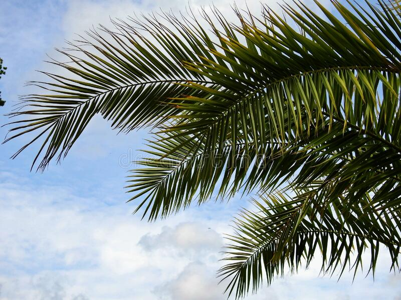 Green Palm Tree Under Blue Cloudy Sky during Daytime stock image