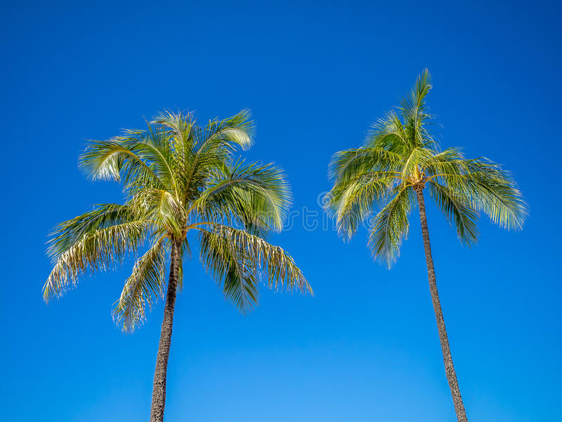 Download Green Palm Trees Stock Photo - Image: 40561585
