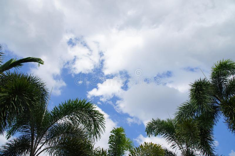 Green palm trees, blue sky, white clouds royalty free stock photo