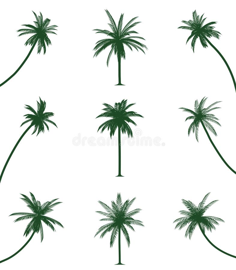 Green palm trees. Illustration of green palm trees. Isolated white background. EPS file available vector illustration
